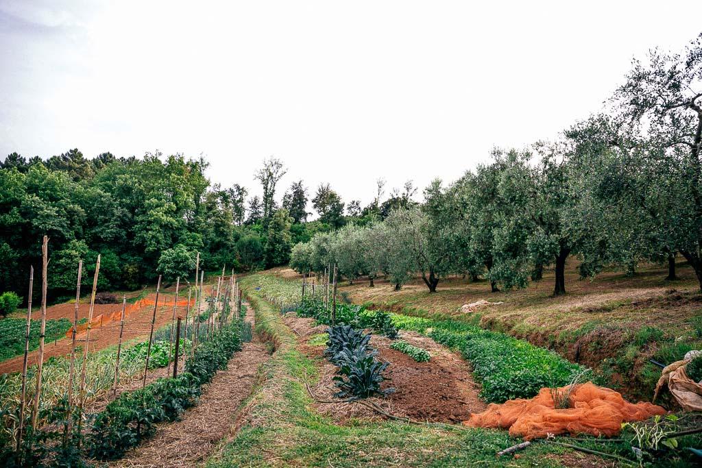 azienda agricola holiday prato verde